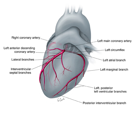 Illustrated Guide to Anomalous Coronary Activity: An Interactive 3D ...