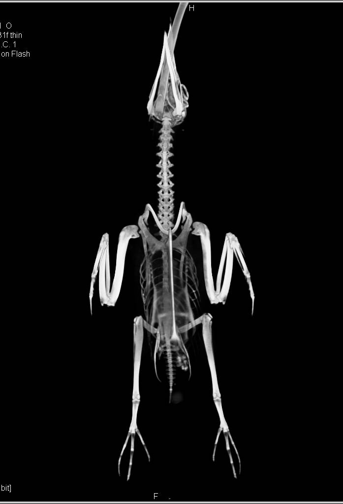 3D of a Puffin - CTisus CT Scanning