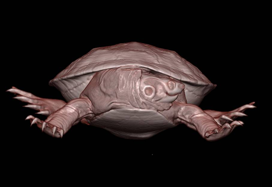 3D of Turtle in Color - CTisus CT Scanning