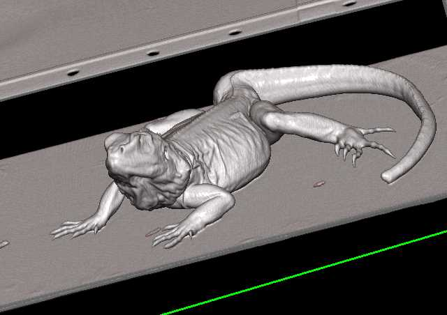 Lizard with Back Pain in 3D - CTisus CT Scanning