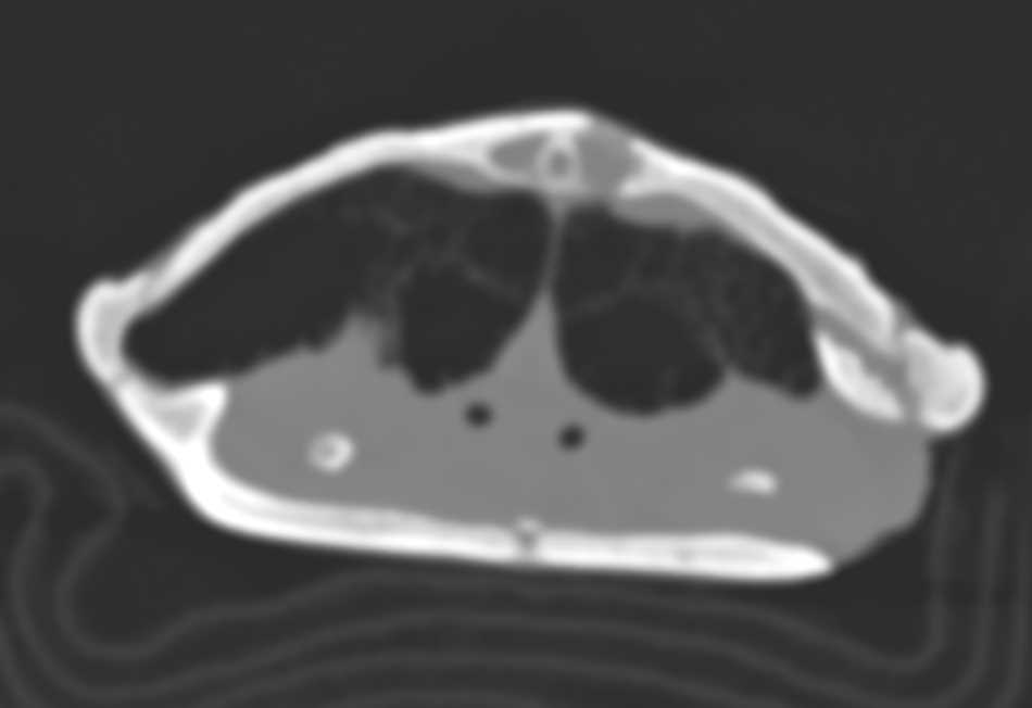 Turtle with Shell Infection - CTisus CT Scan