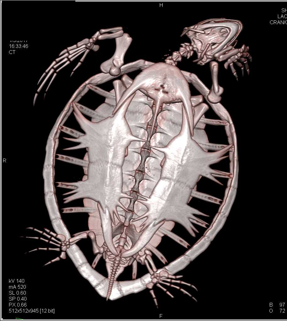 3D Imaging of a Turtle - CTisus CT Scan