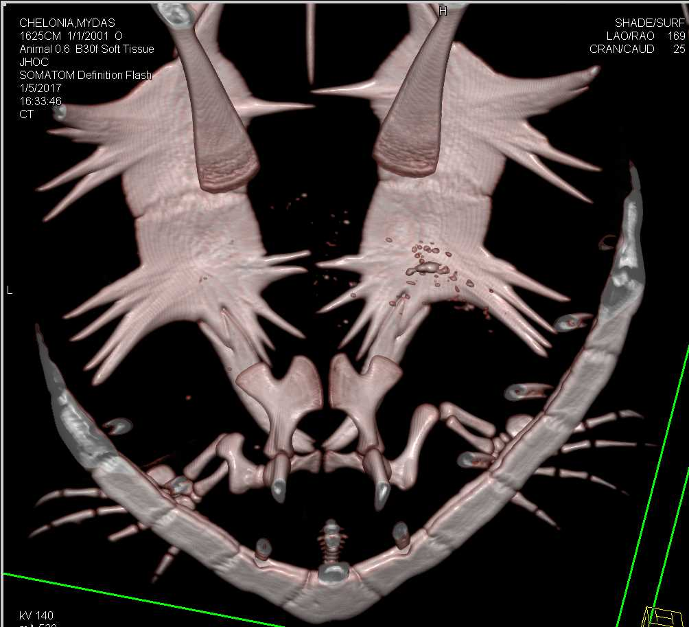 3D imaging of the Turtles Shelll and Bones - CTisus CT Scan